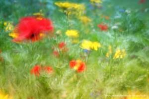 Wiesenblumen I