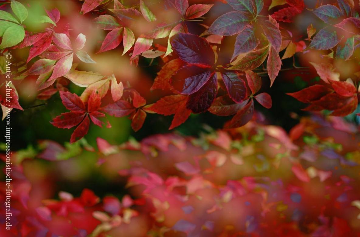 Herbstwald Schönerlinde II